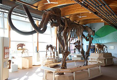 Cast of the Hebior Mammoth at YBIC