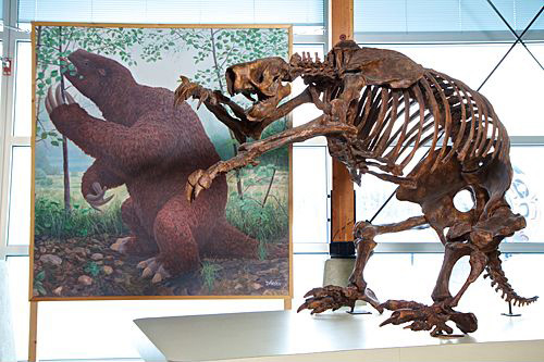 Jefferson's Ground Sloth by Jan Vriesen, with skeleton.